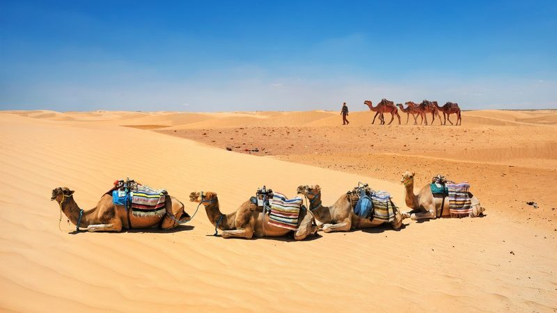 Quand partir dans le désert en Tunisie ?