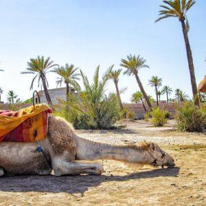 Un séjour Marrakech avec des tout-petits